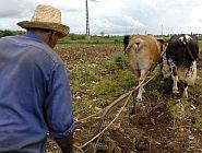 Tierras Ociosas: Más de 900 Solicitudes en Villa Clara